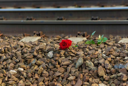Red rose lies next to the rails on the train tracks