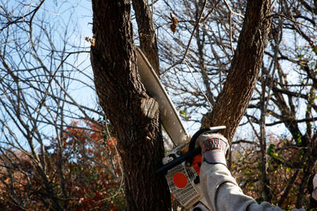 tree removal service: Trimming tree