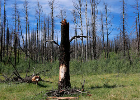 quemado: Forest of burned trees