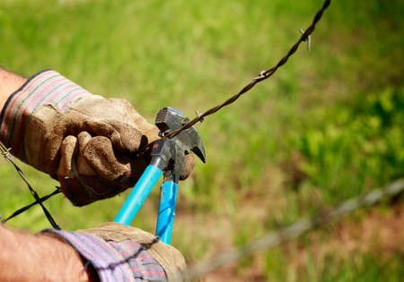 bearded wires: Fencing: Man cutting old barb wire farm fence with hand fencing tool