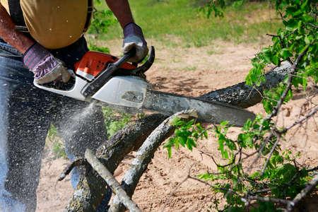 Professionnel coupe des arbres à l'aide d'une tronçonneuse électrique Banque d'images - 76390385