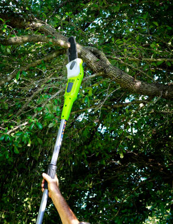 tree removal service: Cutting tree branches with a pole chain saw