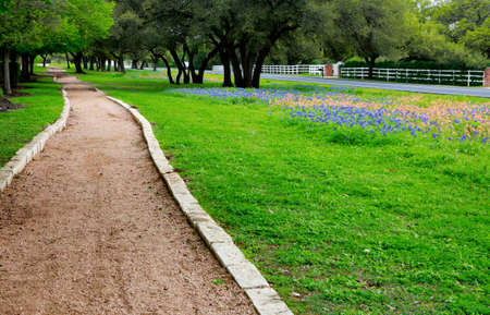 Walking trail along the beautiful field of Texas wild flower, green grass and oak trees.