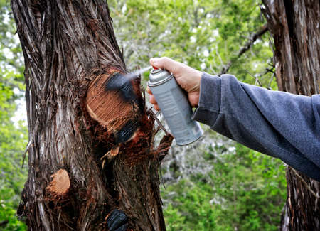 Spray with paint after cutting off tree branches. Stock Photo