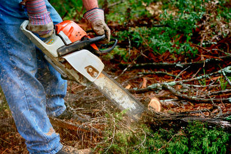 Professional is cutting trees using a chainsaw Stock Photo