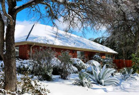 Agave under snow. Winter storm in Texas. 免版税图像