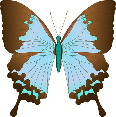 Blue Sailboat Ulysses butterfly Papilio Achillides ulysses . Vector illustration. Ilustracja