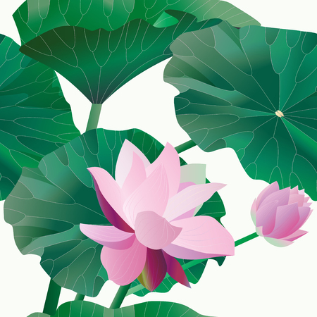 Two pink lotus on stalks with leaves on a white background. Seamless pattern.Tropical flowers. Vector illustration, objects with transparency. Invitation, card. EPS10