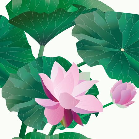 Two pink lotus on stalks with leaves on a white background. Seamless pattern.Tropical flowers. Vector illustration, objects with transparency. Invitation, card. Çizim