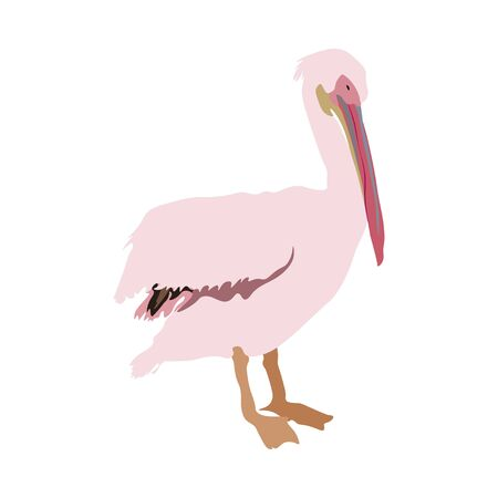 Delicate light pink pelikan on white background vector illustration. Picture isolate with exotic bird. EPS 10 Ilustração