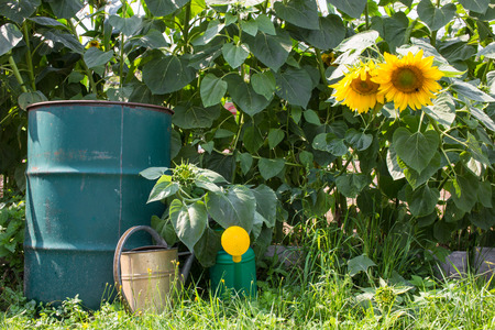 sundry: Farm scenery with blooming sunflowers and horticultural sundry Stock Photo