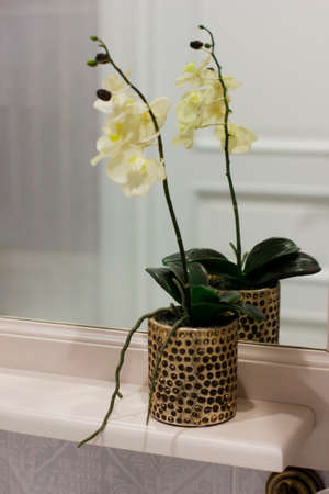 Interior flower Orchid in the pot on the shelf in the bathroom Stock Photo