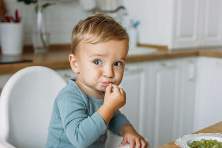Charming concentrated little baby boy eating first food green grape at the bright kitchen at home