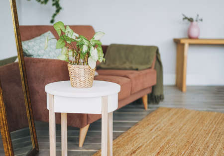 Green house plant in wicker pot on white table in cozy living room, scandinavian interior