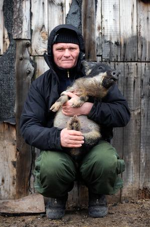 Пожилой мужчина занимается разведением новых пород свиней на своей сельской ферме вдали от города