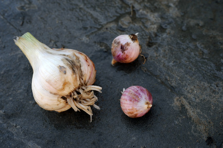 Onions and garlic of local varieties grown on an ecological farm using natural organic fertilizers from cow and chicken manure Фото со стока