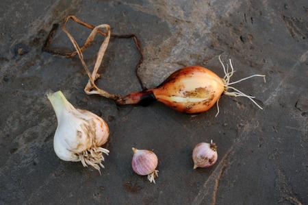 Лук и чеснок местных сортов, выращенных на экологической ферме с использованием натуральных органических удобрений из коровьего и куриного помета