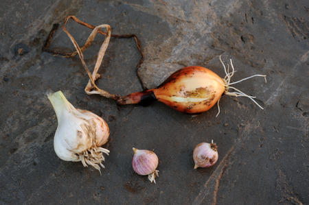 Onions and garlic of local varieties grown on an ecological farm using natural organic fertilizers from cow and chicken manure Stock Photo