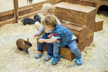 Jongen en meisje spelen met de konijnen in de kinderboerderij