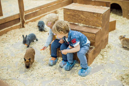Boy and girl play with the rabbits in the petting zoo