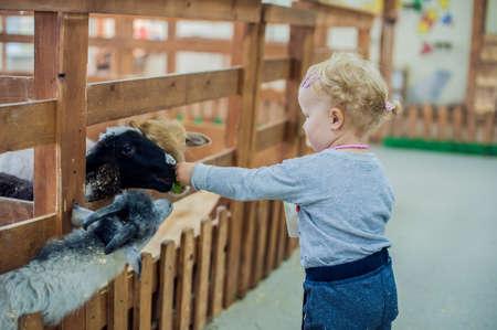vivarium: Toddler girl feeding sheep on the farm Stock Photo