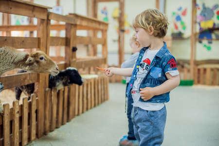 ovejitas: El muchacho del niño está alimentando ovejas en la granja