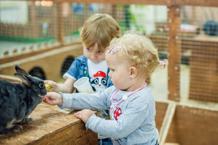 petting: children play with the rabbits in the petting zoo Stock Photo