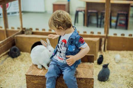 Jongen spelen met de konijnen in de kinderboerderij