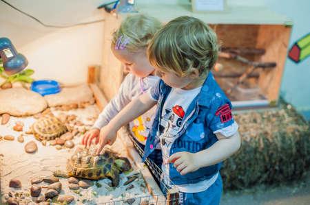 동물원에 거북이를 쓰다듬어주는 아이들