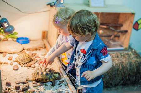 petting: Children stroking a turtle in the petting zoo