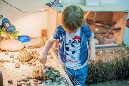 turtles love: Boy petting a turtle in the petting zoo