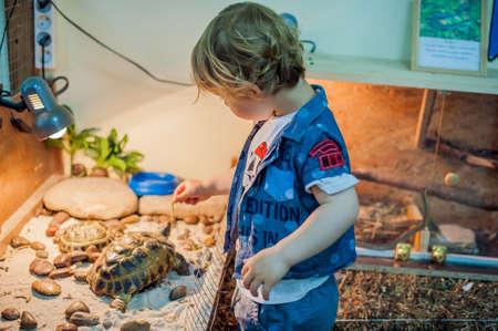 쁘띠 동물원에 거북이를 귀여워하는 소년