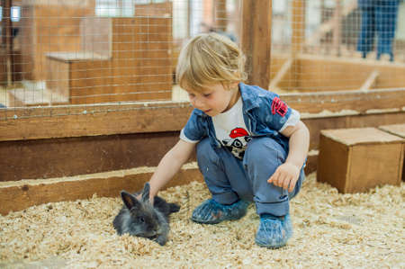 vivarium: Boy play with the rabbits in the petting zoo