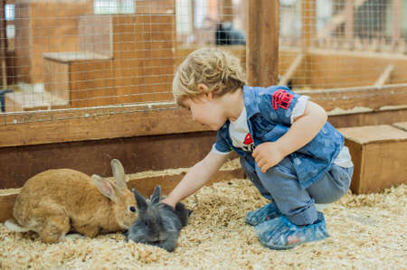 Boy play with the rabbits in the petting zoo