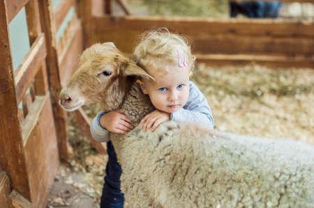 유아 소녀 양고기 농장에서 포옹 스톡 콘텐츠