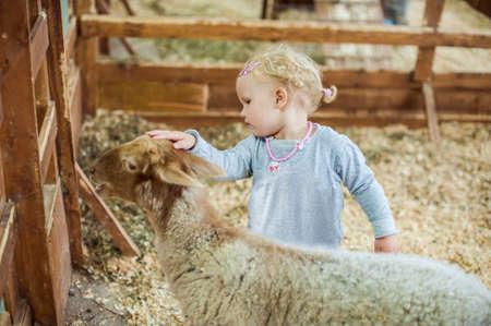 vigilance: Girl stroking a lamb on the farm