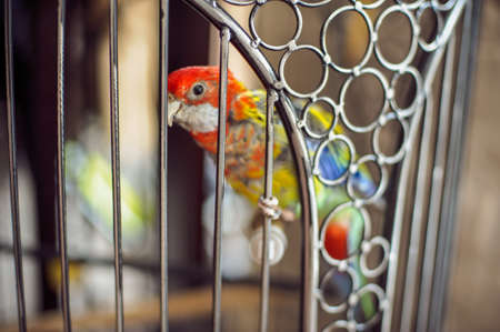pet breeding: A parrot in a cage in pattern Stock Photo