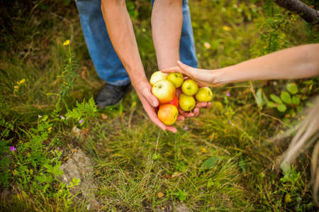 harvests: Young couple harvests of apples in autumn Stock Photo