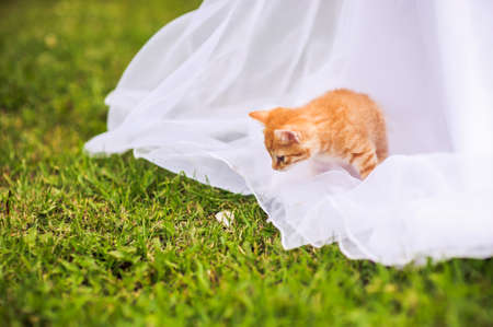 Red kitten on a brides wedding dress