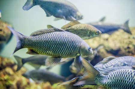 수족관 물고기, 차가운 바다, close up picture 스톡 콘텐츠