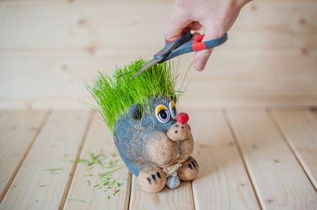 cutting hair: Hair cutting, hair grass, hedgehog with needles of grass