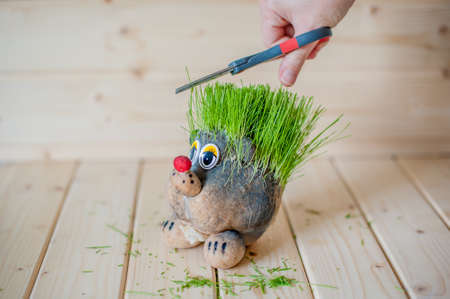 rooting: Hair cutting, hair grass, hedgehog with needles of grass