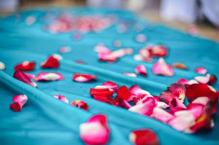 pink rose petals: Pink rose petals on a blue cloth