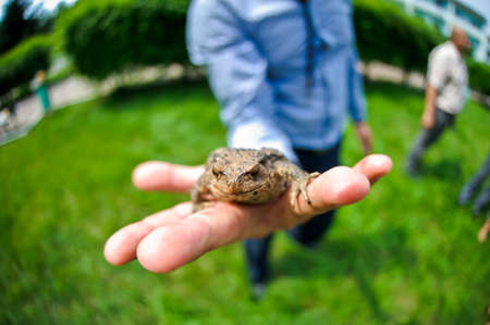 tiny frog: Great spotted frog in the mans hand