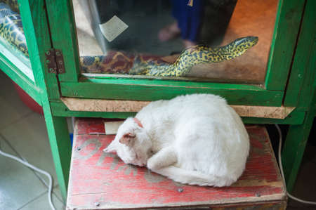 sliding scale: White cat sleeping, a snake crawling over glass