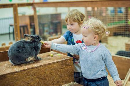 kinderen spelen met de konijnen in de kinderboerderij