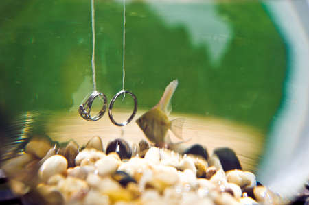 Wedding rings underwater in an aquarium with goldfish Stock Photo