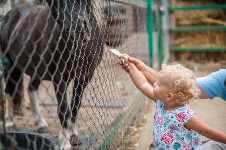 helpfulness: Girl feeding a horse in a zoo