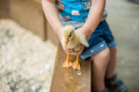 Toddler jongen spelen met de eendjes in de kinderboerderij