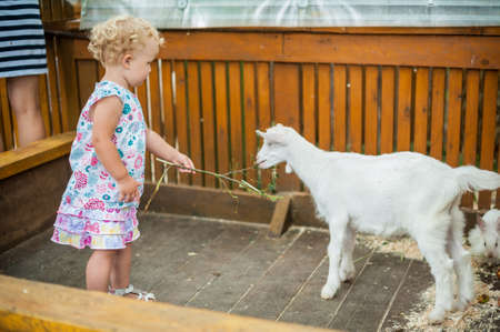 vivarium: Toddler girl play with the lamb in the petting zoo